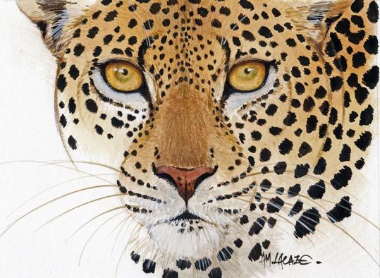 leopard-Lacaze